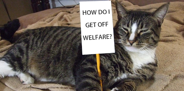 How to get off welfare